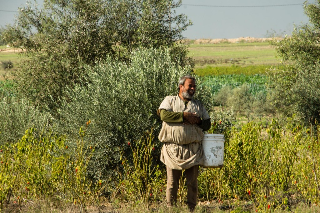 Farmer from Johr Al-Deek, Gaza - Photo: Johnny Barber, November 28th, 2012
